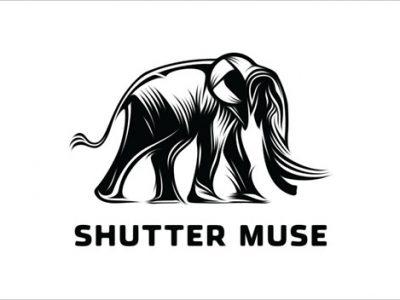 Mẫu thiết kế logo mạnh mẽ lấy cảm hứng từ chú voi